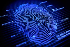 Fingerprints and Palm Prints